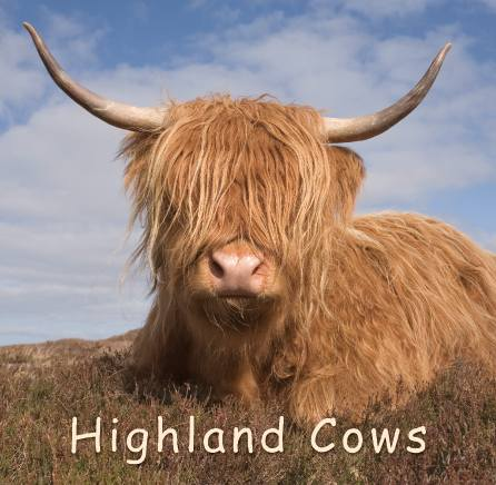 Highland Cows - Gift Book